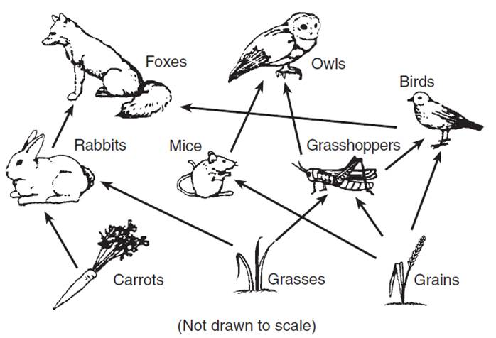 understanding our garden better with a food web